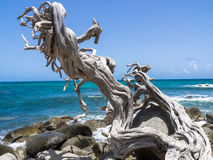 Views around Aruba coastline - tree Stock Images