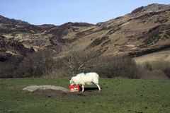 Views around Capel Curig. And the Snowdonia National Park Stock Images