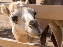 Views around Phillips Animal Sanctuary Stock Images