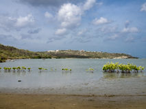 Views around St Michiel salt pan mangroves Stock Photography