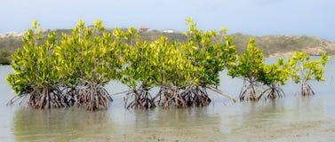 Views around St Michiel salt pan mangroves Stock Photo