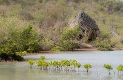 Views around St Michiel salt pan mangroves Stock Images