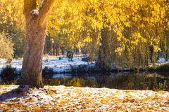 Views of the autumn park with yellow leaves on snow in sun rays and  river bridge. Royalty Free Stock Photo