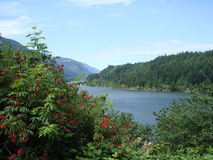 Views on Columbia river. state Oregon USA Stock Photography