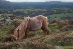 Views from Conwy Mountain stock photography