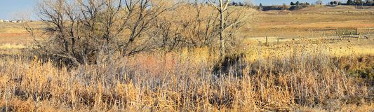 Views from the Cradleboard Trail walking path on the Carolyn Holmberg Preserve in Broomfield Colorado surrounded by Cattails, wild. Life, plains and Rocky stock photos