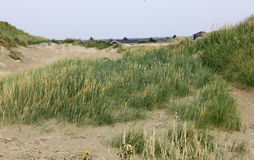 Views of the dunes of the North Sea Stock Images