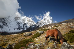 Views of the Everest base camp trek Royalty Free Stock Photos