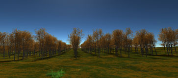 Views of the expanse of still lined with orange trees Royalty Free Stock Photo