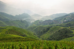 Views of green Longji terraced fields and Tiantouzhai village Royalty Free Stock Photo
