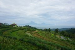 views of green rice fields on the hill stock photos