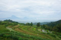 views of green rice fields on the hill stock photography