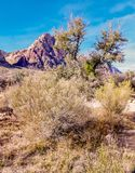 Spring Mountain Ranch State Park, Nevada, USA. Views from hiking trails in Red Rock Canyon National Park during the winter months, just outside of Las Vegas Royalty Free Stock Photos