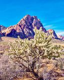 Spring Mountain Ranch State Park, Nevada, USA. Views from hiking trails in Red Rock Canyon National Park during the winter months, just outside of Las Vegas Royalty Free Stock Image