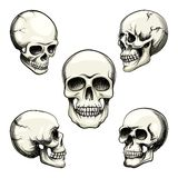 Views of human skull Stock Photo