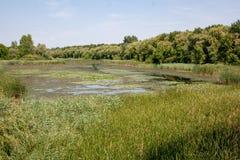 Views of Hungarian naturereserve Kis Balaton stock photo
