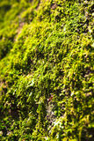 Views of the moss Stock Images