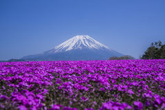 Views of Mount Fuji and phlox blooming in spring Royalty Free Stock Photos