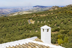 Views of an olive grove Royalty Free Stock Photography