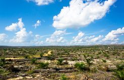 Views of palm oil plantations Royalty Free Stock Images