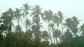 Views of the palm and the trees. Beautiful views of the palm and the trees stock video footage