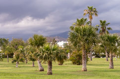 Views of a park with Palm and the sky with storm clouds Stock Photography