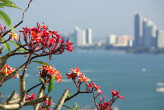Views of Pattaya, Thailand Royalty Free Stock Photo