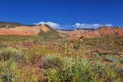 Views of Red Mountain Wilderness and Snow Canyon State Park from the  Millcreek Trail and Washington Hollow by St George, Utah in. Spring bloom in desert stock image