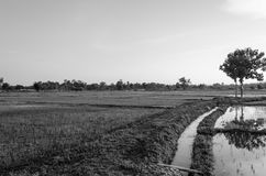 Views of the rice fields in Asia Stock Images