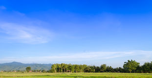 Views of the rice fields in Asia Stock Image