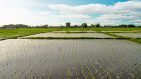 Views of the rice fields in Asia Royalty Free Stock Photos