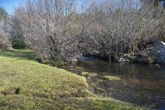 Views of the river Navacerrada Royalty Free Stock Image