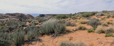 Views of sandstone and lava rock mountains and desert plants around the Red Cliffs National Conservation Area on the Yellow Knolls. Sweeping Views of sandstone Stock Image