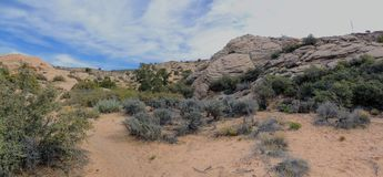 Views of sandstone and lava rock mountains and desert plants around the Red Cliffs National Conservation Area on the Yellow Knolls. Sweeping Views of sandstone Royalty Free Stock Photo