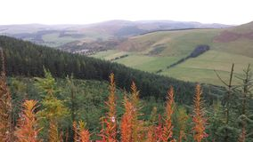 Views from the Scottish borders. While biking Stock Photos