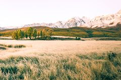 Views of the snow capped peaks and forest. In a mountain valley royalty free stock image