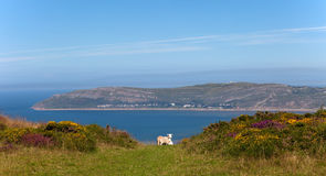 Views to Llandudno Royalty Free Stock Photography