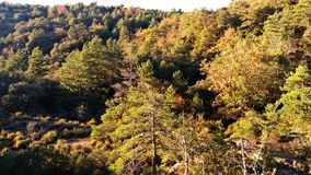 Views of the trees canopy. Views of the pines trees canopy from the top of a mountain Royalty Free Stock Photos