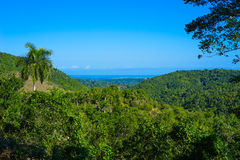 Views of the tropical forest with palm trees and clear blue sky Stock Images