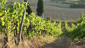 Views of a Tuscan Vineyard (9 of 11). Scenes from a Tuscan vineyard stock video