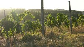Views of a Tuscan Vineyard (10 of 11). Scenes from a Tuscan vineyard stock video footage