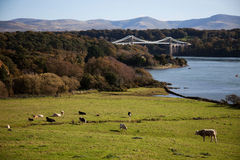 Views from under the Anglesey Bridges Royalty Free Stock Image