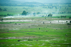 Viewscape米种田和培养的区域在泰国 免版税图库摄影