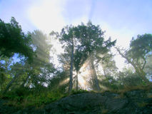 Vigas de Sun Fotografía de archivo libre de regalías