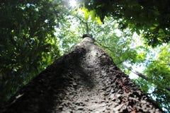 Vigas de Sun a través de árboles Fotos de archivo