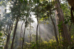 Vigas solares en bosque Fotografía de archivo