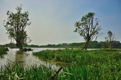Vigia dos pássaros, prado flutuado e árvores velhas Imagem de Stock