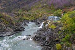 Vigia rujir megohm, Nova Zelândia imagem de stock royalty free