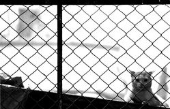 Vigilance across the fence Royalty Free Stock Photography