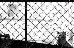 Vigilancia a través de la cerca Fotografía de archivo libre de regalías